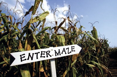 corn maze fall fun